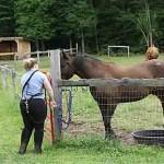 horse-paddock
