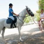 Coaching horse