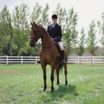 Advance Horse Riding Instructor Course