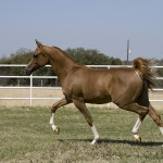 teaching-trot-diagonal