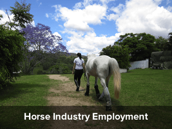 Equine Studies college finance subjects