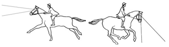 HorseVision
