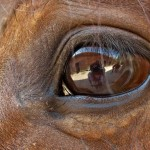 Horse Vision – Interesting Facts that Affect Horse Behaviour