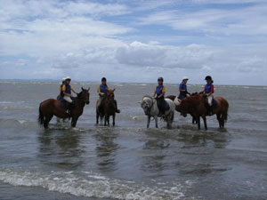 horse-business-ideas