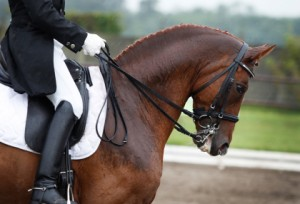 horse-dressage