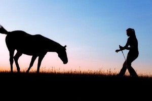 Lunging on a horse