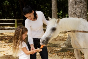 Rewarding Your Horse
