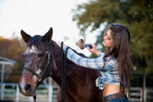 Career With Horses