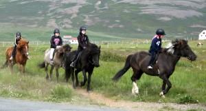 horseridingschool